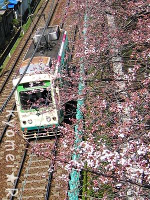 都電と桜。