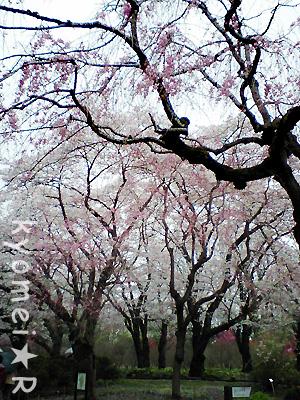雨の神代植物園。